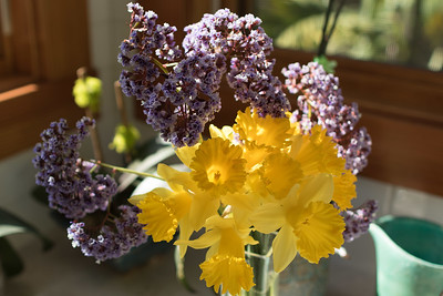 Daffodils and Sea Lavender bouquet backlit with sunshine 3/21/2015