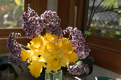 Daffodils and Sea Lavender arrangement. 3/21/2015