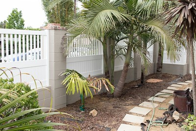 New vinyl fencing on new wall in front. My Chambeyronia macrocarpa palm is a little beat up still.