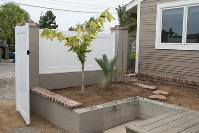 Newly expanded planter with Caryota no and Cycas thouarsii x cupida